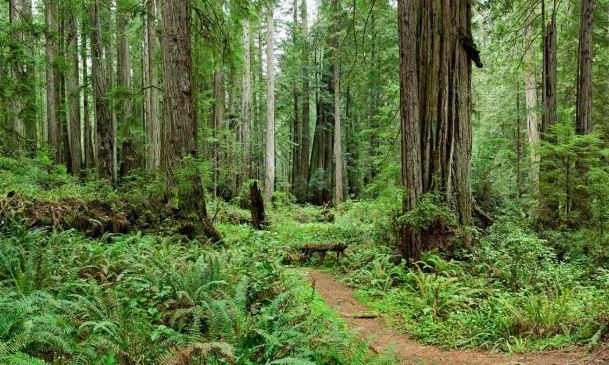 places to visit in northern California, northern California things to see