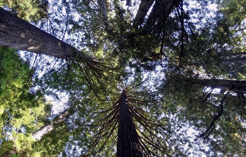 the best time to visit Redwood, the best time to visit Redwood forest