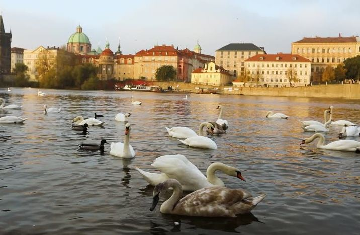 Christmas Activities in Prague, Christmas things to do in Prague