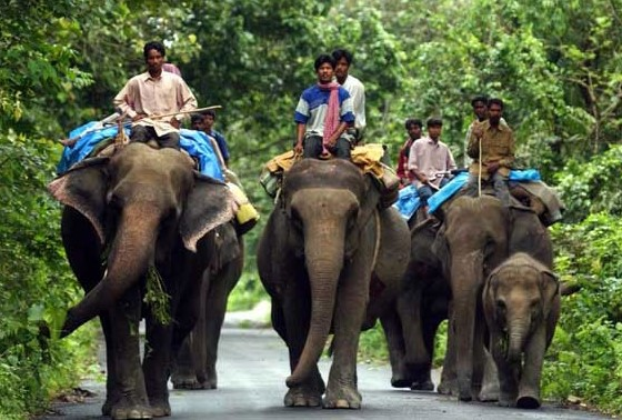 exciting wildlife tours of West Bengal, most-visited safari of West Bengal, famous wildlife tour in West Bengal,