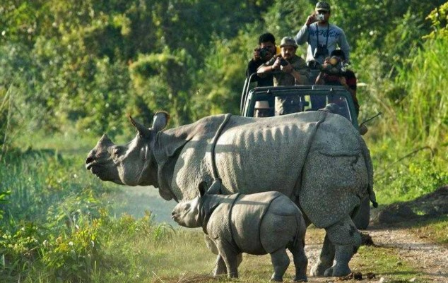 most-visited safari of West Bengal, famous wildlife tour in West Bengal, jeep safari tour of West Bengal, must-visit wildlife tour of West Bengal, best wildlife tour in West Bengal, wildlife tour of West Bengal
