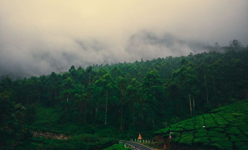 must-try things to do at Munnar in Monsoon, list of 10 famous monsoon things to do in Munnar, top thing to do at Munnar in Monsoon, popular thing to do at Munnar in Monsoon, beauty of Munnar's monsoon, must-try thing to do in the monsoon of Munnar, Monsoon in Munnar ,